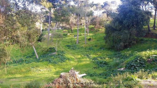 La Nature à repris ses Droits au Bois Sacré à La Seyne