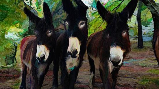 Urgent - sauver ânes / save donkeys