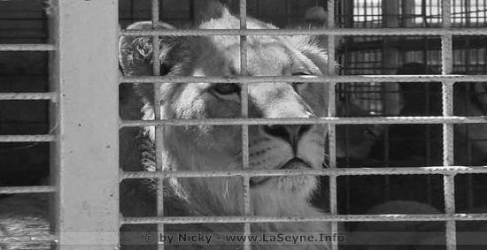 Cirques d'Animaux sauvages en Paca: Les Villes qui les ont interdits