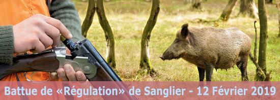 Battue de Régulation de Sanglier, le 12 Février 2019