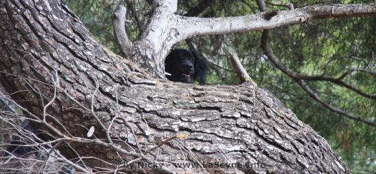 Loups: L'Etat mobilisé pour concilier les Activités d'Elevage et la Préservation de l'Espèce
