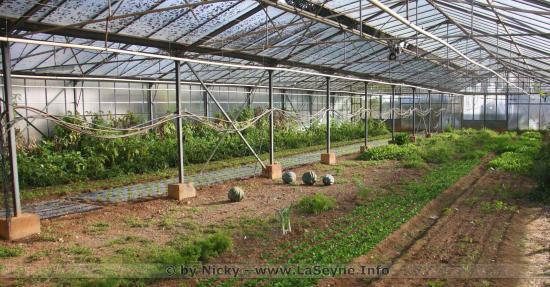 #Coronavirus #Covid19: Plan de Soutien de l'Agriculture