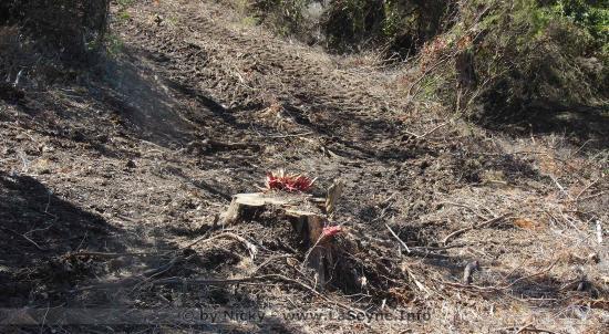Réforme ONF: Une Privatisation qui met en Danger les Forêts publiques