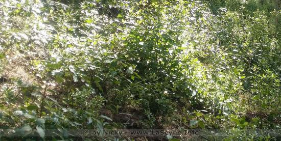 Déconfinement: Reprise de Collecte des Déchets végétaux à Domicile, et sur Rendez-Vous